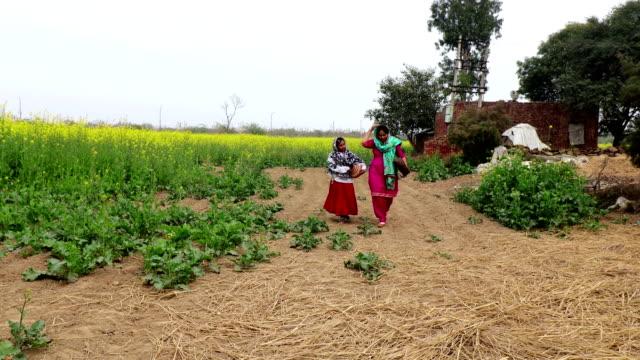 Mother & daughter walking near mustard crop field Mother & daughter of Indian ethnicity walking near mustard crop field carrying lunch box & mud pot in hands. haryana stock videos & royalty-free footage