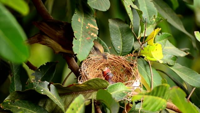 matka karmienia dziecka ptak w gniazdo - młody ptak filmów i materiałów b-roll