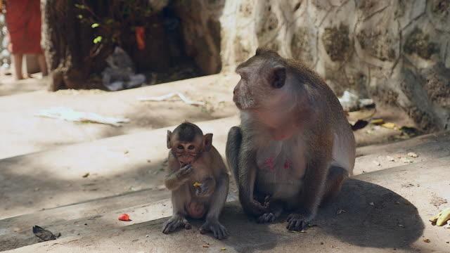 mother monkey grooming her infant on the back - уход за поверхностью тела у животных стоковые видео и кадры b-roll