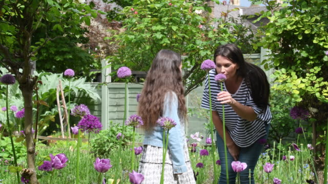 mother with two daughters in garden smelling purple flowers - annusare video stock e b–roll