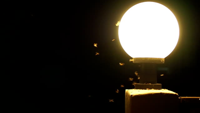 Moths termites and insects playing, flying around light at night. video