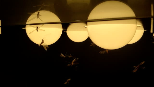 Moths termites and insects playing, flying around light at night