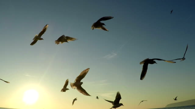 SLOW motion, Birds flying and fishing in the sea. video