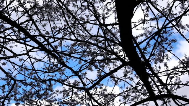 Bewegung des Blasens von Baumblättern gegen blauen wolkenverhangenen Himmel – Video