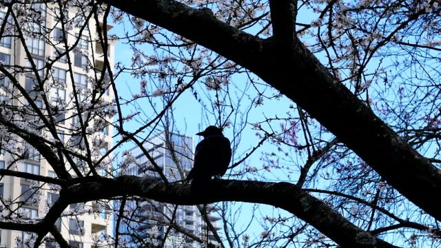 Bewegung der Krähe, die auf einem Baum steht und Baumblatt gegen blauen wolkenverhangenen Himmel bläst – Video