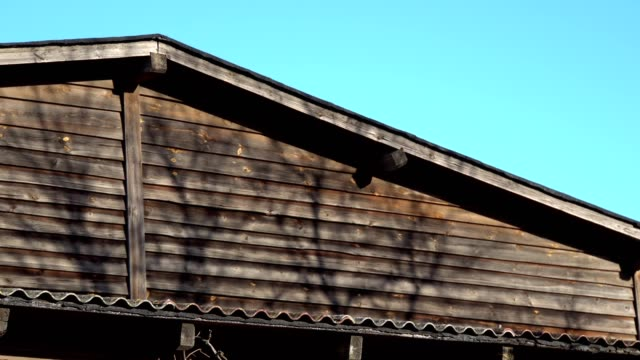 vídeos de stock e filmes b-roll de motion of leaf shade on the wall - hera trepadeira