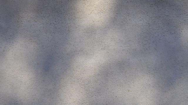 牆上的葉蔭運動 - 影 個影片檔及 b 捲影像