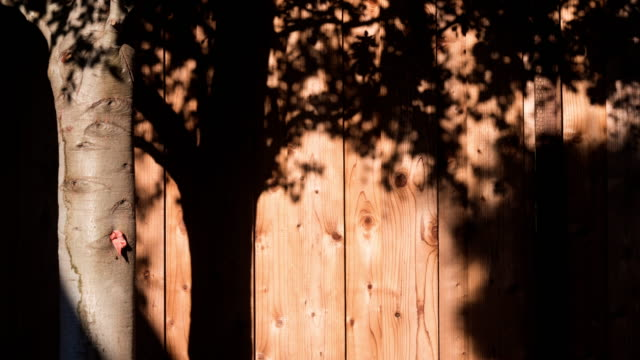 Motion of tree shade on wood wall 4K DCI