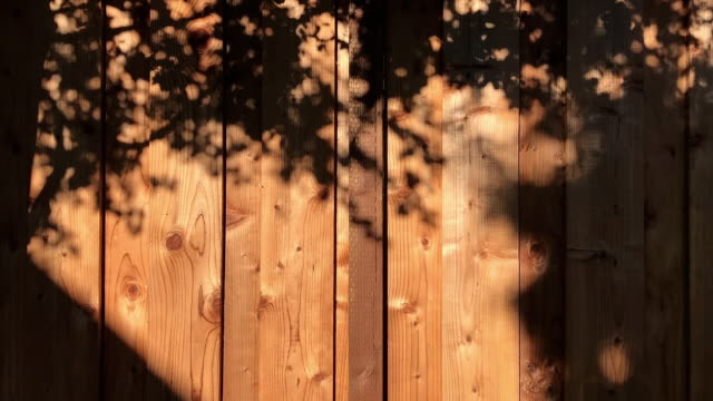 motion of trees shade on wood wall full hd - muro video stock e b–roll