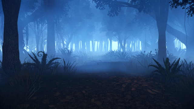 Motion through misty night forest video