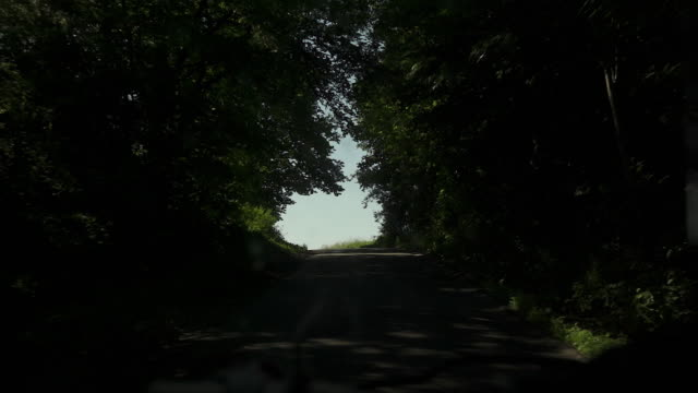 Motion through tree lined road video