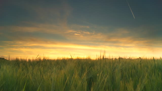 HD Motion Time-Lapse: Sunset Over Field Of Barley video