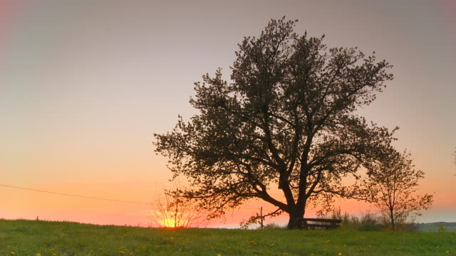 HD Motion Time-Lapse: Tree On Meadow At Sunset video