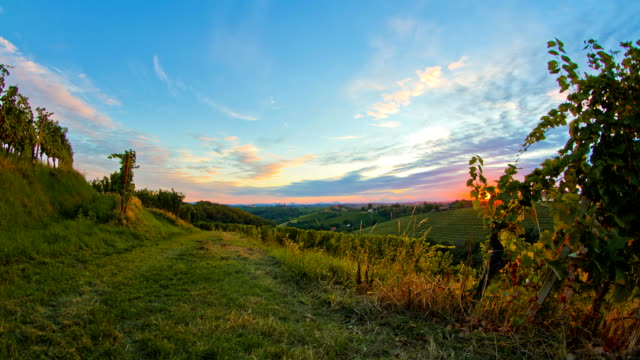 HD Motion Time-Lapse: Vineyard At Sunset video