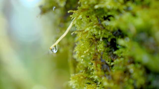 motion video of waterdrop on green moss - muschio flora video stock e b–roll
