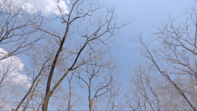 Motion view of branches of dried tree without leaves on blue sky with sunlight.