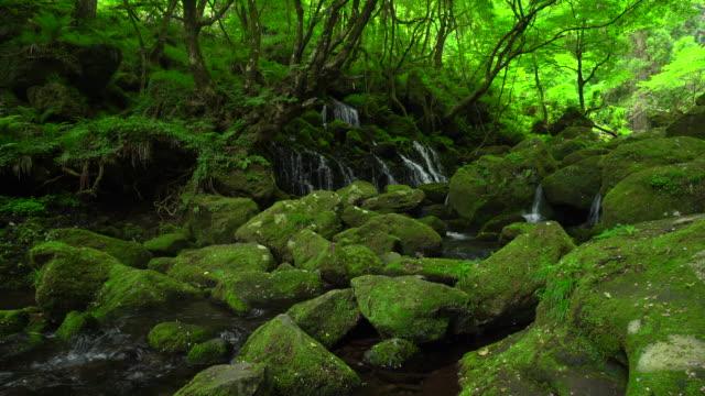 motodaki falls - muschio flora video stock e b–roll