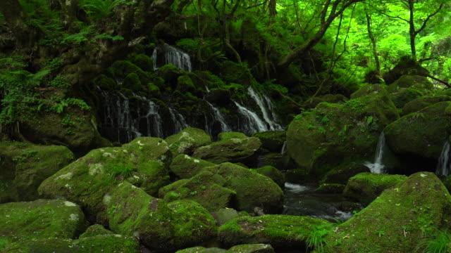 Motodaki falls