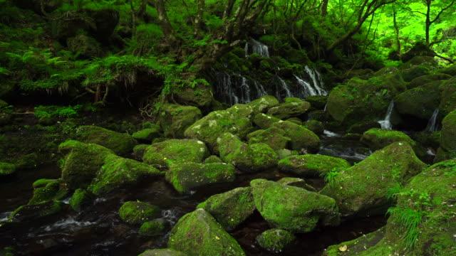Motodaki falls Motodaki falls running water stock videos & royalty-free footage