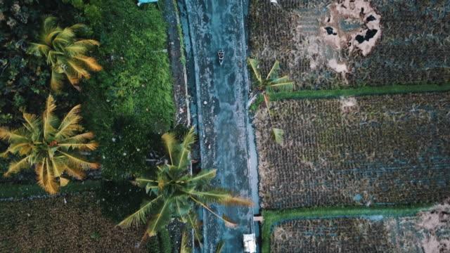 vidéos et rushes de moto conduite avec palmiers et riz champs environnant 4k - indonésie
