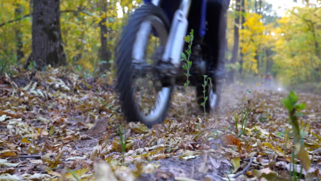 motorcyclist rides on trail in autumn forest. motorcycle rides along wood path kicking up dry fallen leaves. biker trains in nature. extreme sport. slow motion - freestyle motocross video stock e b–roll