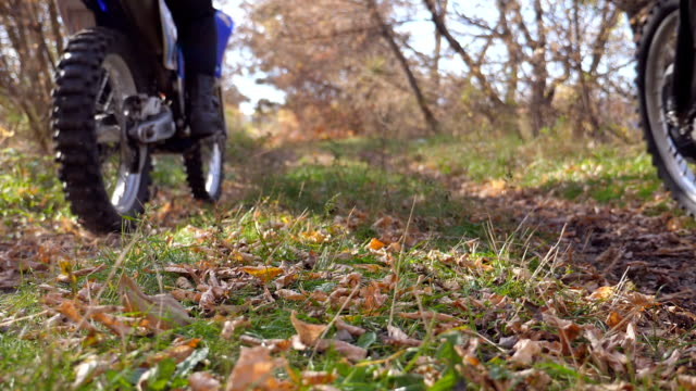 motorcyclists rides on trail in autumnal forest. motorcycles crosses along wood path kicking up colorful fallen leaves. bikers train in nature. blurred background. back view slow motion - freestyle motocross video stock e b–roll