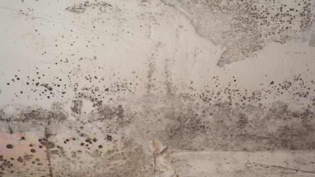 vídeos de stock e filmes b-roll de mould is a kind of fungus that develops from airborne spores - sem higiene