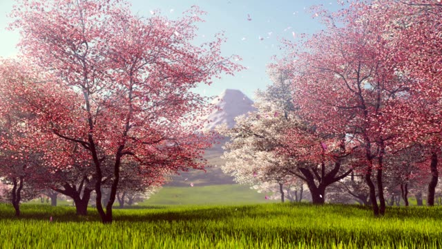 Mount Fuji and flowering cherry trees slow motion