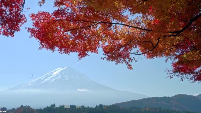 mount fuji in autumn with fall leaves at kawaguchi lake,Yamanashi, Japan video