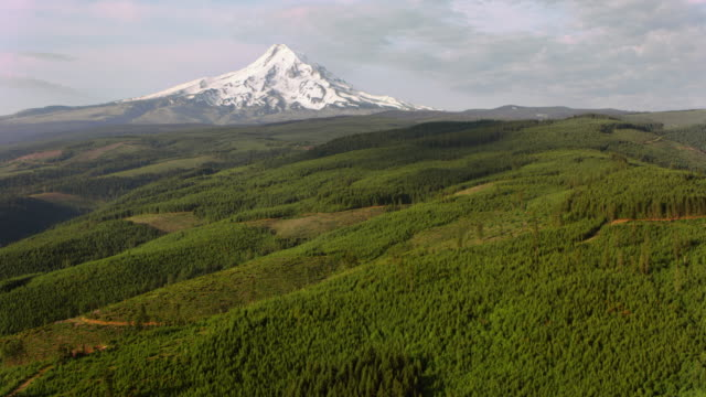 AERIAL Mount Hood rising above the vast forest video