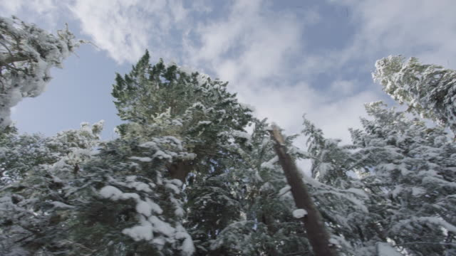 Mount Rainier Snowy Trees Curvy Road