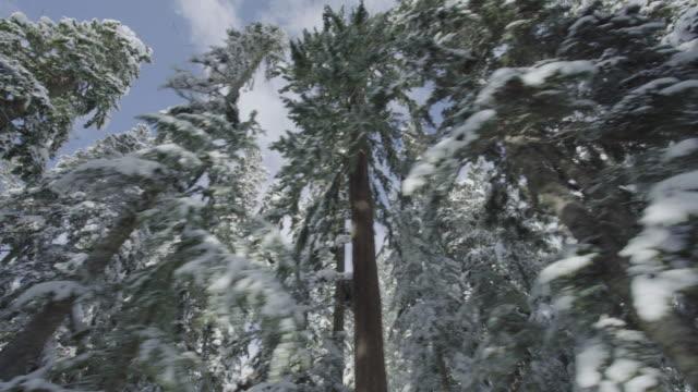Mount Rainier Snowy Trees Straight Road