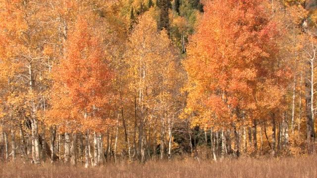 Mountain autumn colors video