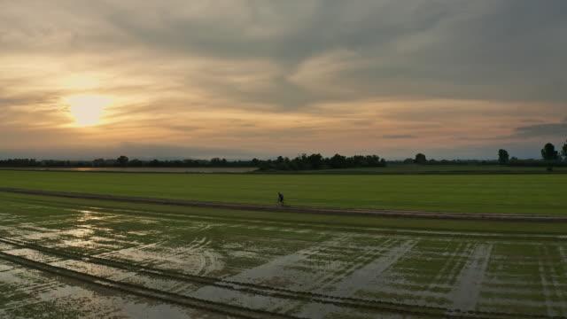 Mountain bike ride through rice paddy fields at sunset