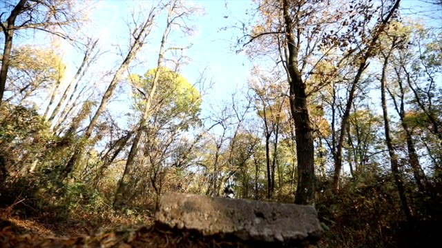 Mountain biker jumping over the rock in a wilderness forest video