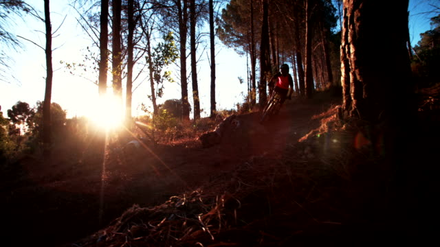 Mountain biker on a dirt path in a wilderness forest video