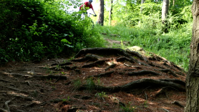 Mountain biker riding in forest track