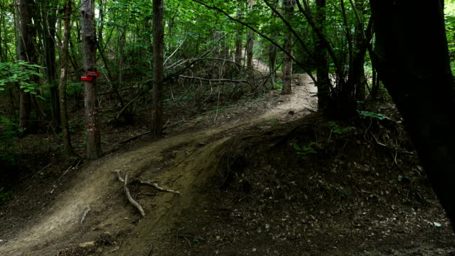 Mountain Biker Riding On Forest Trail