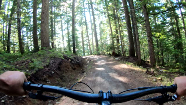 Mountain biker traverses forest trail with agility