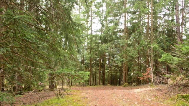 mountain biking uphill in the forest - bike tire tracks video stock e b–roll