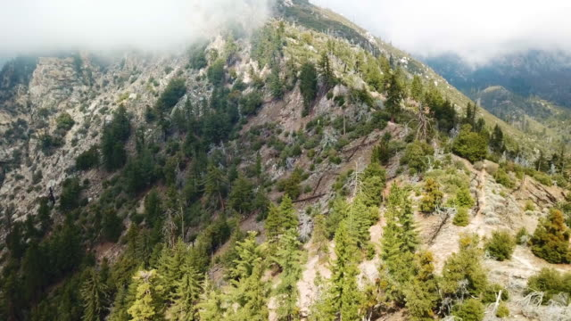 mountain ecosystem angeles forest aerial - kieferngewächse stock-videos und b-roll-filmmaterial