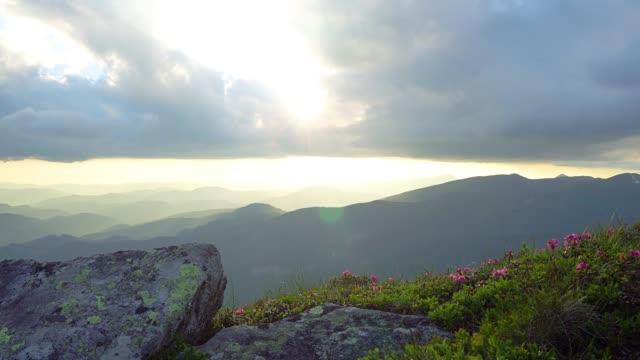 mountain blommor i strålar av solnedgången - bergsrygg bildbanksvideor och videomaterial från bakom kulisserna