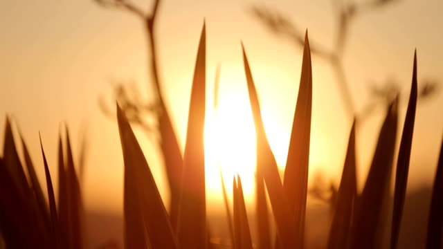 Mountain Flowers Sunset On The Wind