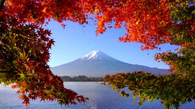 fuji di montagna con acero rosso in autunno, lago kawaguchiko, giappone - autunno video stock e b–roll