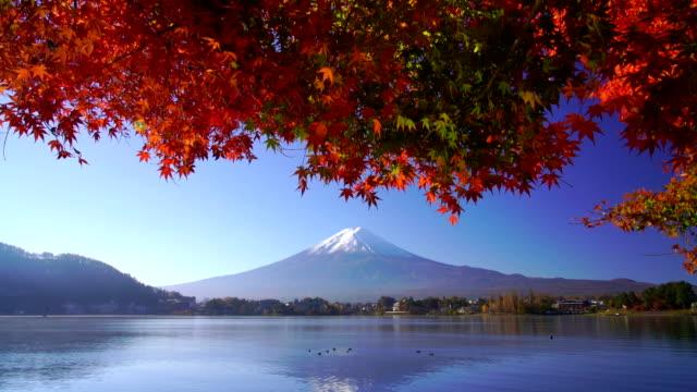 vidéos et rushes de fuji de montagne avec l'érable rouge en automne, lac de kawaguchiko, japon - fuji yama