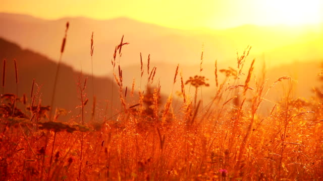 Mountain Grass at Dawn video