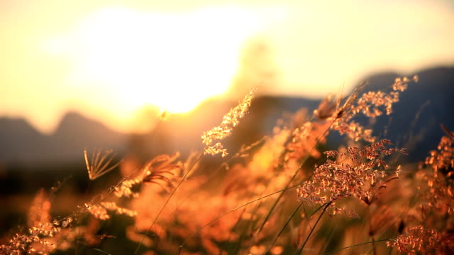 vídeos de stock e filmes b-roll de mountain grass flowers sunset on the wind. - natureza close up
