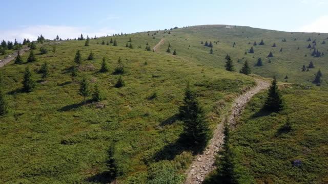 berg på sommaren - städsegrön växt bildbanksvideor och videomaterial från bakom kulisserna