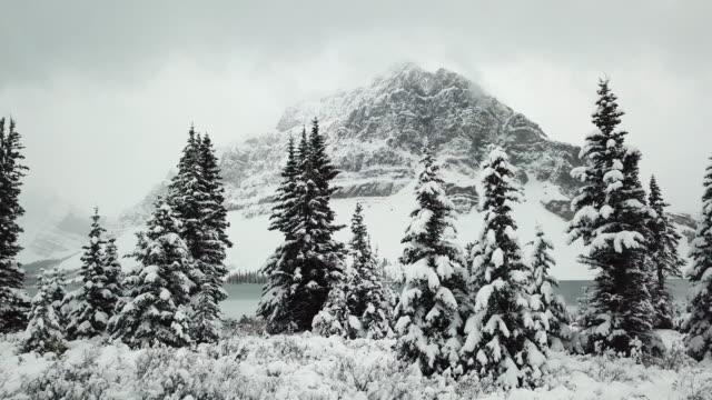 berget i vinter tallskog - klippiga bergen bildbanksvideor och videomaterial från bakom kulisserna