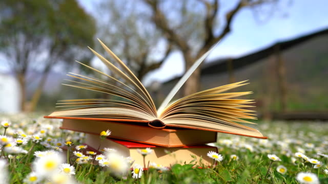 A mountain of old books laying on the ground among the grass and camomiles. Yellow papers turning over by the wind. Books giving knowledge to people. Education concept